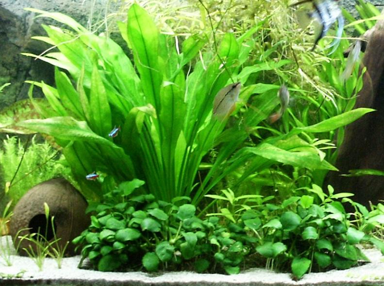 Plantas Low Tech